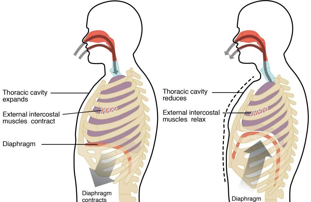 Przez brzuch do… kręgosłupa?