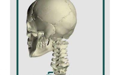 Wpływ stawu szczytowo- potylicznego  na postawę ciała