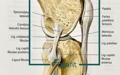 Tendinopatia więzadła właściwego rzepki